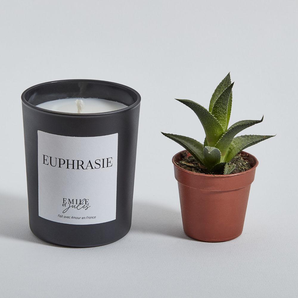 bougie-plante-euphrasie