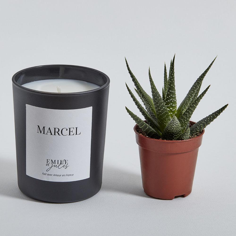 bougie-plante-marcel